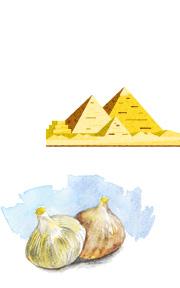 にんにくの発祥と歴史